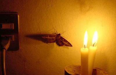 Moth MAIN