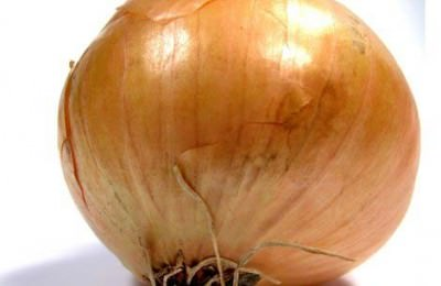 Common onion - Allium cepa