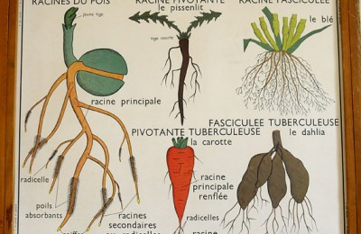 French poster Vegetables