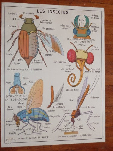 French Insects