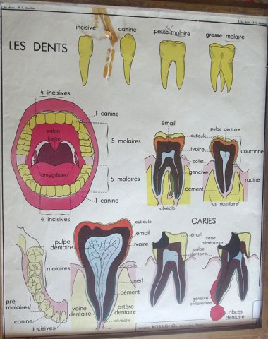 French poster TEETH