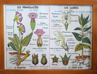 French poster flowers